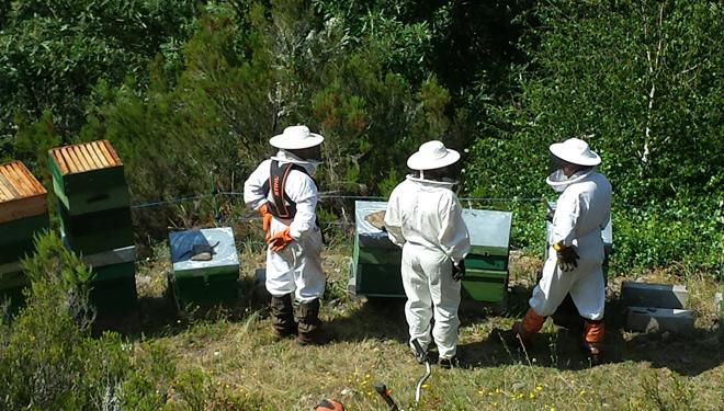 Técnicos da Fundación revisan xunto cos apicultores un apiario na procura de mostras do oso.