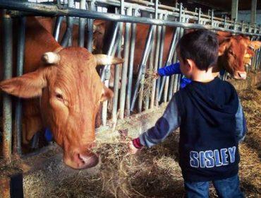 O Consorcio da vaca 'rosse', un caso de éxito na valorización do leite