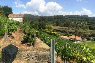 Curso básico de viticultura y enología