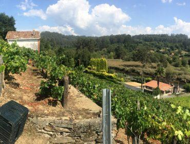 Curso básico de viticultura e enoloxía