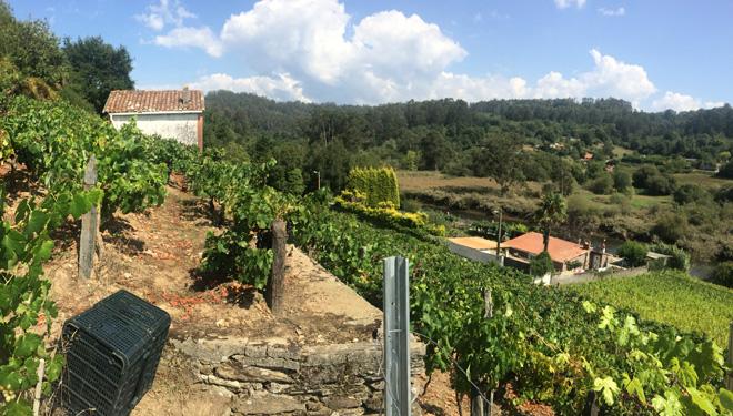 Socalcos de viñedos sobre o río Mandeo