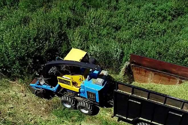 O mato e os restos de poda confírmanse aptos para biocombustibles