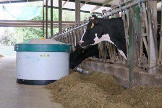 Advirten dun incremento das deficiencias de minerais na alimentación do vacún de leite