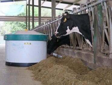 Advierten de un incremento de las deficiencias de minerales en la alimentación del vacuno de leche