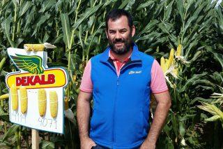 Dekalb presenta en Galicia dúas novas variedades de millo forraxeiro