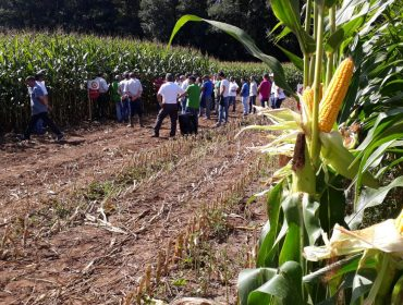 Catálogo Delagro de sementes de millo forraxeiro 2020: Variedades adaptadas ás necesidades de cada granxa