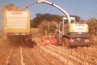 Primeras imágenes del ensilado del maíz en Galicia