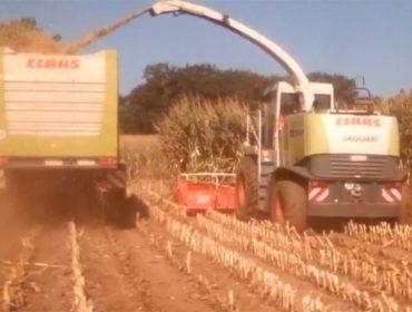 Primeiras imaxes do ensilado do millo en Galicia