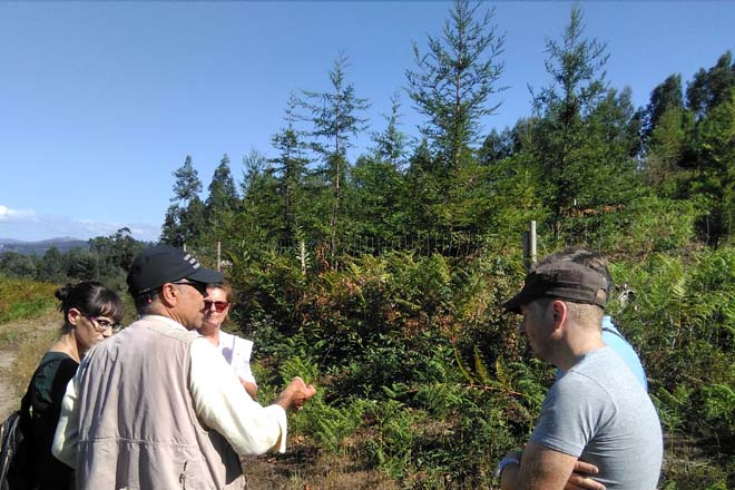 Tres montes que ensaian alternativas de futuro para o bosque galego