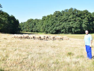 """""""As ovellas son auténticas bombeiras forestais"""""""