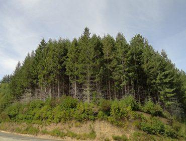 Conferencia o próximo martes en Lugo sobre o modelo forestal de Chile