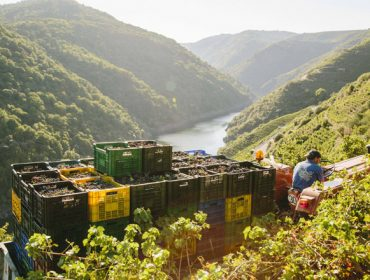 Os viños galegos, entre os máis caros de España