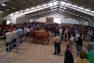 Adjudicadas las cuatro novillas subastadas en Pedrafita a una misma ganadería