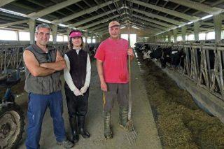 Sat Gomelle, grano húmedo de maíz para la ración de vacas y cebado de terneros