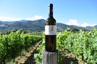 Casal Novo: La historia de 5 socios que se unieron para producir el mejor vino de Valdeorras