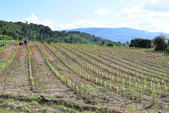 Lista de beneficiarios das axudas da Xunta para reimplantación e reconversión de viñedos