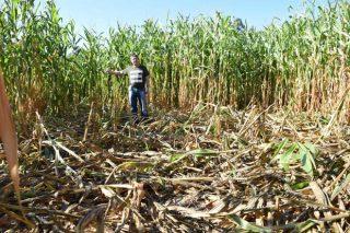 Vídeo: Así arrasan os xabaríns os cultivos dos agricultores en Galicia