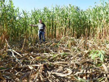 La Xunta destinará 800.000 euros en 2019 a ayudas para paliar los daños del jabalí en el campo