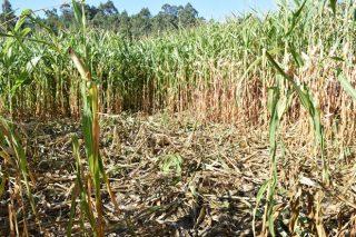 A Xunta volverá convocar en 2019 as axudas para danos do xabarín
