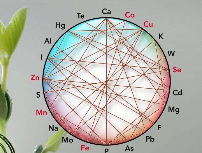 Cuadro de interacciones entre minerales (Ensminger et al, 1990)