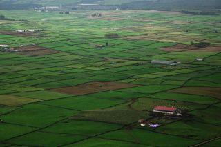 Azores, paraíso de las vacas en pastoreo