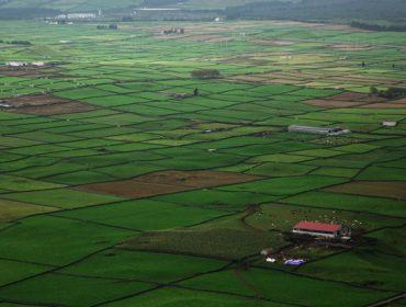 Azores, paraíso das vacas en pastoreo