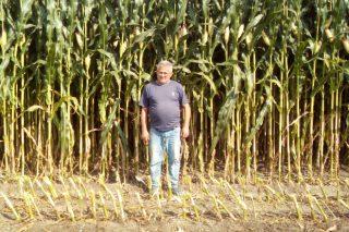 A Limia cultivará este ano máis millo forraxeiro para as gandarías de Cobideza