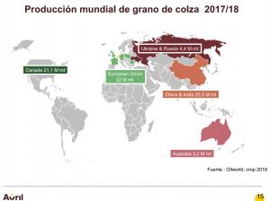 COLZA_PRODUCCION