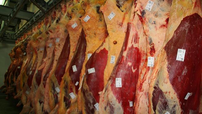 Carne-Vaca-Frigorificos-Bandeira-