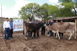 La empresa gallega Embriovet forma a estudiantes en Perú para transferencia embrionaria