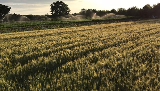Rega con xurros, un proxecto ourensán para fertilizar os cultivos