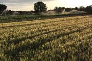 Riego con purines, un proyecto orensano para fertilizar los cultivos
