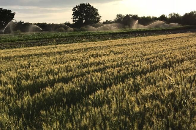 Así es la hoja de ruta para reducir las emisiones de gases en el agro