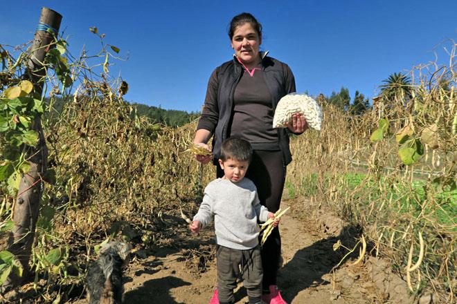 Murias Maseda, unha das maiores produtoras de faba de Galicia