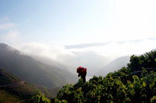 Regina Viarum, a viticultura heroica das ribeiras de Amandi