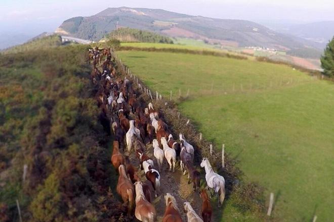 O día 17 os gandeiros baixan o seu gando desde o monte para a feira do día seguinte