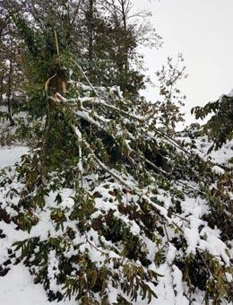 A Xunta descarta actuar nos montes afectados polas nevaradas do outono en Lugo