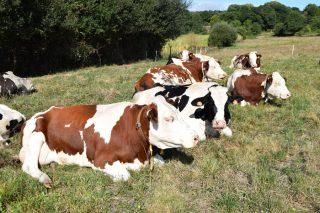 Xornada de portas abertas en granxas da comarca de Chantada