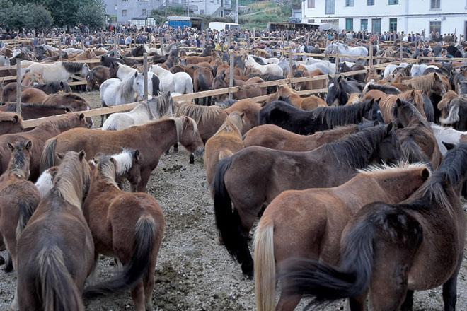 Nova cita coa feira máis antiga de Galicia esta semana nas San Lucas de Mondoñedo