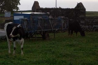 Instalación de ordeño móvil que se desplaza con las vacas.
