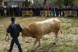 Resultados da poxa de raza Rubia Galega en Adai