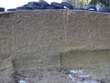 Conservantes Delagro para silo de maíz: eficaces, de fácil manejo, no peligrosos y no corrosivos