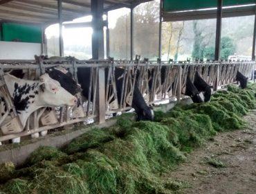 O futuro da produción de leite: Vacas máis eficientes, sustentabilidade e atracción de man de obra