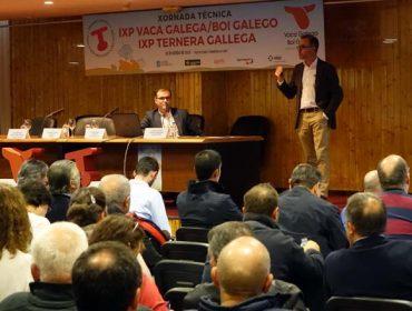 La IGP Vaca Gallega / Buey Gallego se consolida en el campo con 600 ganaderías inscritas