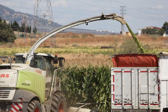 Así xestiona COVAP as forraxes para alimentar cada día a máis de 15.000 vacas de leite