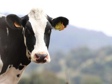 Cal é o destino dos cartos pagados á Interprofesional Láctea?