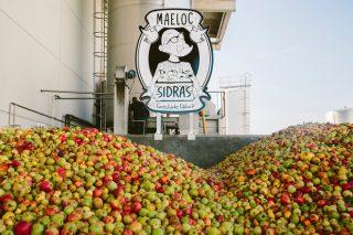 Custom Drinks compró este año 2,5 millones de kilos de manzana gallega