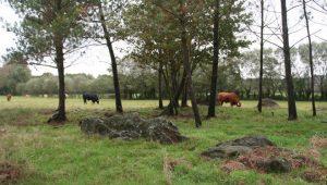 Novas-zonas-de-pasto-Bois-Monterroso-