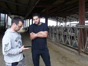 Uniform e Allflex Livestock Intelligence  melloran a xestión dos rabaños de vacún de leite integrando os seus programas
