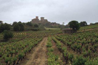 Xornada de portas abertas da Ruta do Viño de Monterrei
